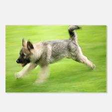 Norwegian elkhound puppy - Postcards (Pk of 8)
