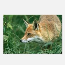 Red fox hunting - Postcards (Pk of 8)