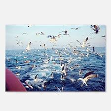 Seagulls - Postcards (Pk of 8)