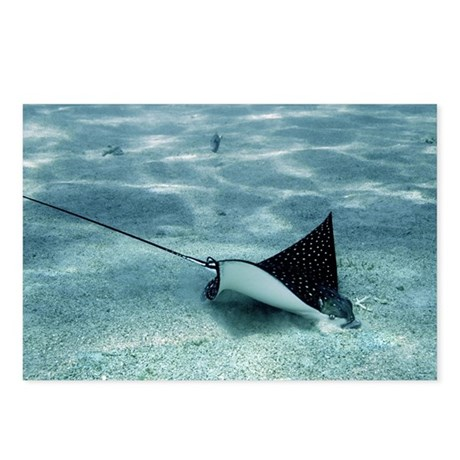 Spotted eagle ray - Postcards (Pk of 8)