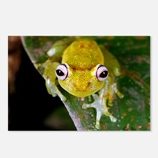Tropical frog - Postcards (Pk of 8)