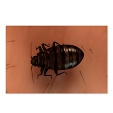 Bedbug, artwork - Postcards (Pk of 8)