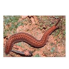 Velvet worm - Postcards (Pk of 8)