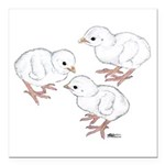 Guineas White Keets Square Car Magnet 3