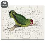 Abyssinian Parrakeet Puzzle 8x10