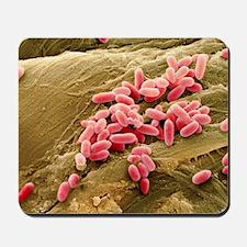 Pseudomonas aeruginosa bacteria, SEM - Mousepad