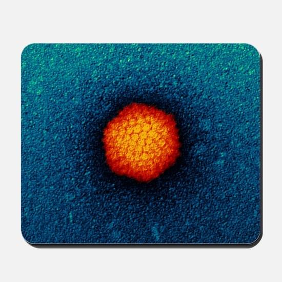 Adenovirus particle, TEM - Mousepad