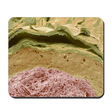 Primate ear canal, SEM - Mousepad