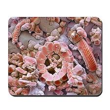 Fossil debris in chalk, SEM - Mousepad