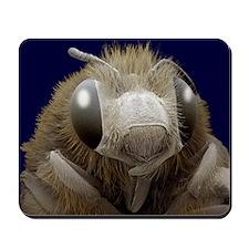 Honey bee, SEM - Mousepad
