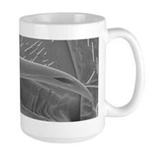 Male bedbug's sexual organ, SEM - Mug
