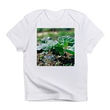 Brussels sprout plant - Infant T-Shirt