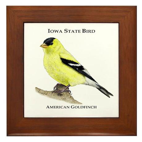 Iowa State Bird Framed Tile By Wildlifearts2