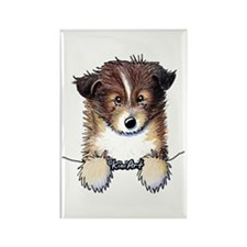 Pocket Sheltie Rectangle Magnet