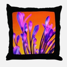 African lily (Agapanthus sp.) - Throw Pillow