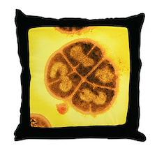 Radiation resistant bacteria, SEM - Throw Pillow