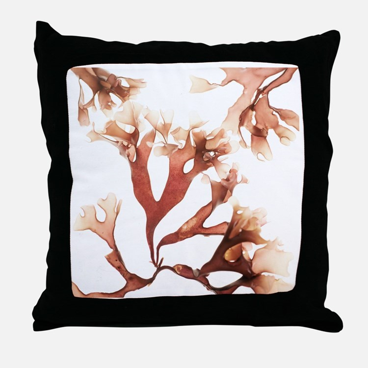 Irish moss seaweed - Throw Pillow
