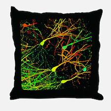Mouse brain neurons, light micrograph - Throw Pill