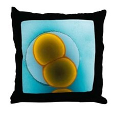 Meningitis C bacteria, TEM - Throw Pillow