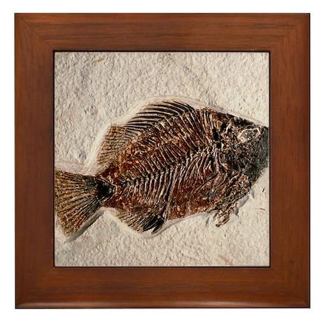 Fossilised fish, Priscacara serata - Framed Tile