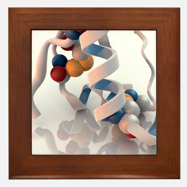 Insulin molecule - Framed Tile