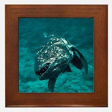 Coelacanth fish - Framed Tile