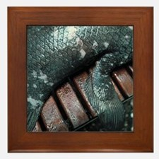 Coelacanth fish fin - Framed Tile