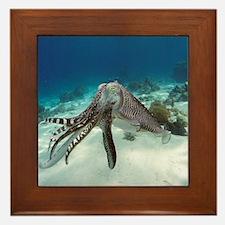 Broadclub cuttlefish - Framed Tile