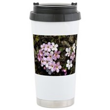 Alpine rock-jasmine (Androsace alpina) - Travel Mug