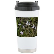 Autumn crocus (Colchicum alpinum) - Travel Mug