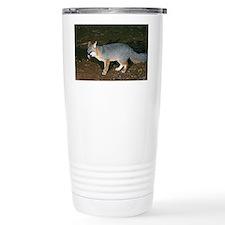 A Gray Fox feeding at night - Travel Mug