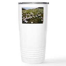 Corsican Crocus (Crocus corsicus) - Travel Mug