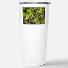 Cotoneaster integerrimus - Travel Mug