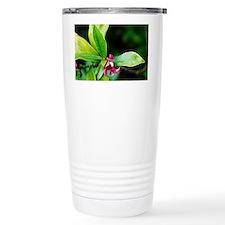Daphne odora 'Aureomarginata' - Travel Mug