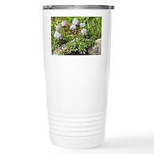 Globularia cordifolia - Travel Mug