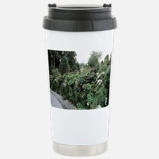 Green wall - Travel Mug