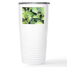 Hosta 'June' - Travel Mug