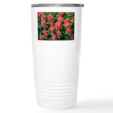 Indian paintbrush flowers - Travel Mug