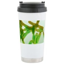Legionella bacteria, light micrograph - Travel Mug