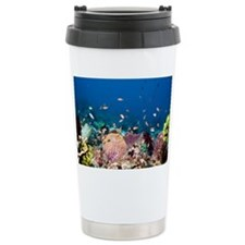 Lyretail anthias fish - Travel Mug
