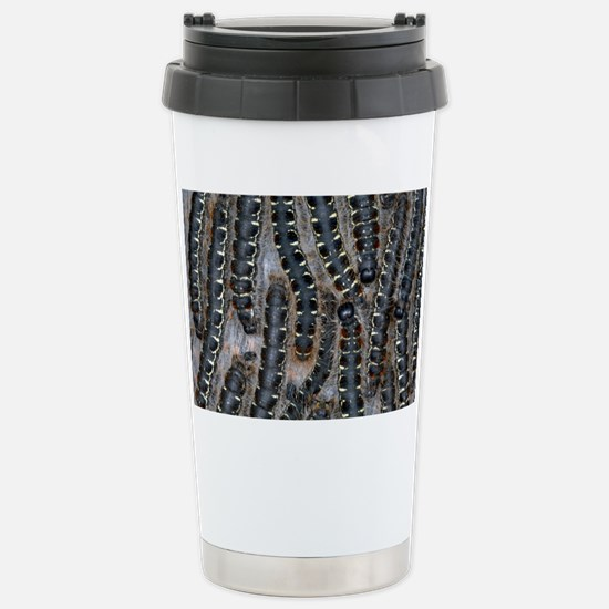 Pine processionary moth caterpillars - Stainless S