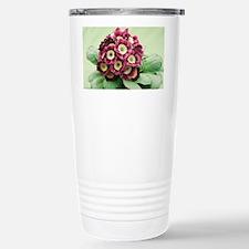 Primula auricula 'Venetian' - Travel Mug