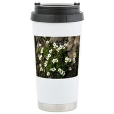 Scree Saxifrage (Saxifraga androsacea) - Travel Mug