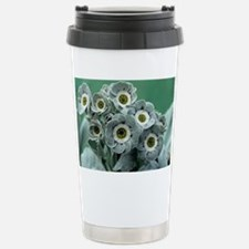 Show auricula 'C.G. Haysom' flowers - Travel Mug