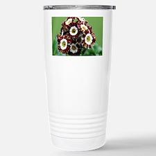 Show auricula 'Mazeta Stripe' flowers - Travel Mug