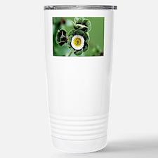 Show auricula 'Orb' flowers - Travel Mug