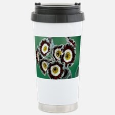 Show auricula 'Queen Bee' flowers - Travel Mug