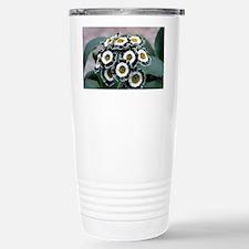 Show auricula 'Serenity' flowers - Travel Mug