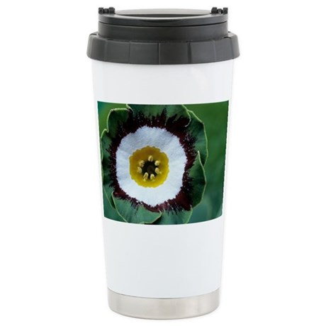 Show auricula 'Tosca' flower - Stainless Steel Tra