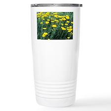 Yarrow (Achillea 'Moonshine') - Travel Mug